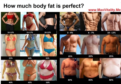 body-fat-percentage
