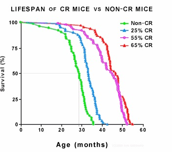 Mice who have hot sexy bodies (CR), whilst keep to a high nutrition diet massively outlive mice who eat too much junk and dont exercise enough. (non-CR)