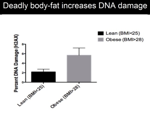 Obesitty damage 1